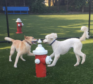 dog training and dog exercise and play in long beach NY