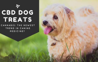 Even_our pets are turning to pot-alternative_medicine for pets