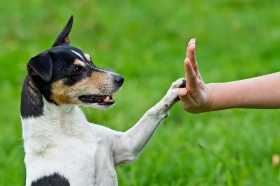 How_Dogs Communicate with Humans-dog_communication