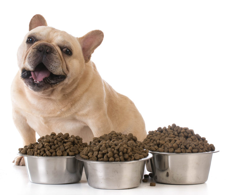 Best Food for dogs long island new york