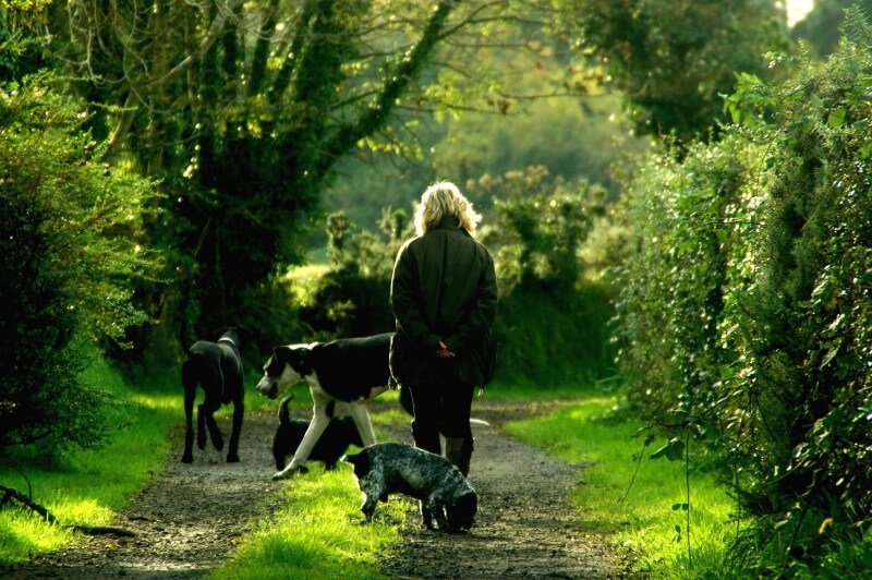 Daily dog excursions - Dogs On a Walk in a Park setting