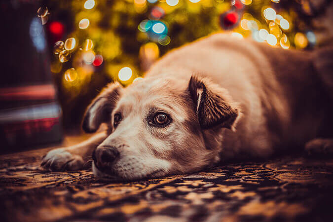 Make the Holidays Less Stressful for Dogs