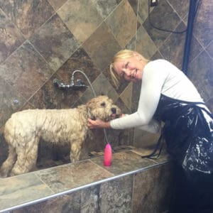 Canine massage and certified dog training Long Beach NY
