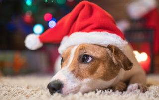 anxiety in dogs during the holidays