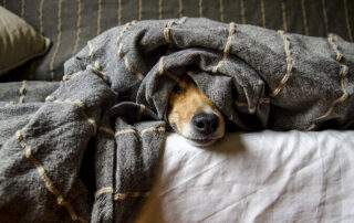 Stop canine cabin fever