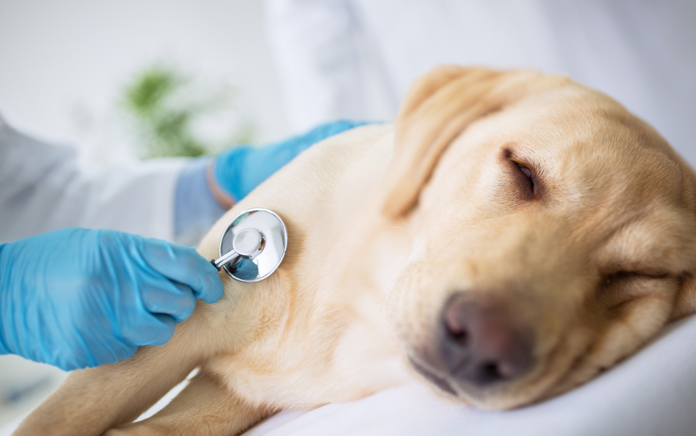 cancer in canines - cancer prevention for dogs