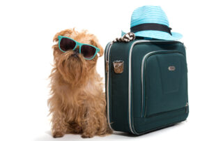 traveling with pets - professional dog trainer nassau county